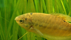 Fish - grass - water Stock Footage
