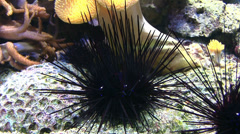 Sea - urchin - water Stock Footage