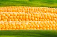 Stock Photo of sweet corn