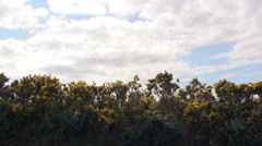 Cloudy sky and gorse shaken by the wind - stock footage