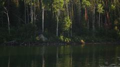 WS TU Forest on lakeshore / Merritt Island, Florida, USA - stock footage