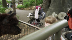 MS Girl (6-7) feeding llama in zoo / Central Park, New York City, USA - stock footage