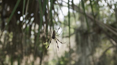 USA, Florida, Oscar Scherer St Park, Spider on its web Stock Footage