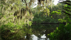 USA, Florida, Oscar Scherer St Park, Trees over pond Stock Footage