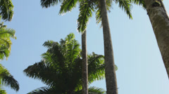 Palm Tree Alley in the Botanical Garden, Rio de Janeiro Stock Footage