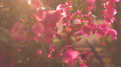 A close up of cute young woman smelling some flowers Stock Footage