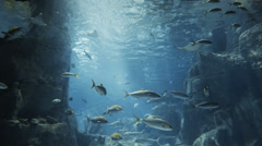Aquatic water world background with lots of different kind of fishes. - stock footage