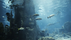 Aquatic water world background with lots of different kind of fishes. Stock Footage