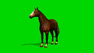 Stock Video Footage of brown horse stands and looks around - seperated on green screen