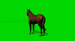 Brown horse stands and looks around - seperated on green screen Stock Footage