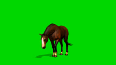 Brown horse graze  - seperated on green screen Stock Footage