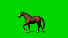 Brown horse walk  - seperated on green screen Stock Footage