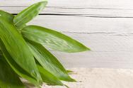 Stock Photo of bunch of fresh ornamental bamboo leaves