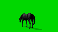 Black horse graze - seperated on green screen Stock Footage