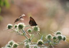 butterfly on flower spring season - stock photo
