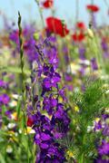 Wild flowers on meadow spring season Stock Photos