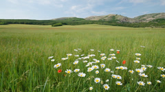 Green meadow in mountain. Nature composition. Stock Footage