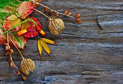 colorful autumn leaves and pods arranged on stripped bark. - stock photo
