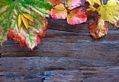 Stock Photo of colorful autumn leaves arranged on stripped bark.