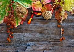 Stock Photo of colorful autumn leaves and pods arranged on stripped bark.