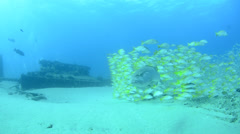 Snappers grouper and shipwreck Stock Footage