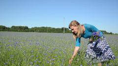 Blond woman pick blue cornflower flowers in agricultural field Stock Footage