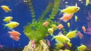 Stock Video Footage of Neon Fish Aquarium