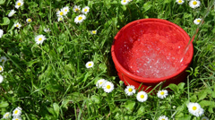 Water running into the red dish in the meadow between flowers Stock Footage