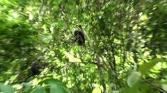 Dusky Leaf Monkeys - 1/2 Stock Footage