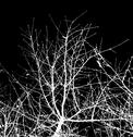 Stock Photo of bare tree branches against a black sky