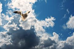 seagull in flight against blue cloudy sky - stock photo