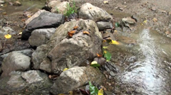 Bees and butterflies on rocks in a stream Stock Footage
