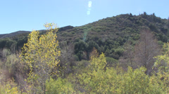 Los Padres National Forest in California, USA Stock Footage