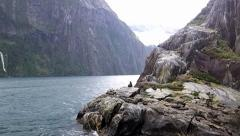 Group of seals on rock outcrop in New Zealand Stock Footage