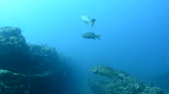 Fishes from the sea of cortez Stock Footage