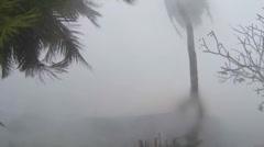 Hurricane Extreme Wind shreds palm tree - stock footage