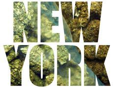 medical marijuana, new york - stock illustration