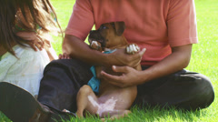 Father holds boxer puppy for his daughter to pet - stock footage