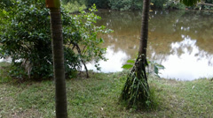 Pond at a wetland area in tropical country. (WETLAND--1) Stock Footage