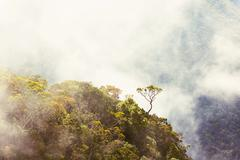 Mystery fog in mountains Stock Photos