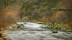 A beautiful river runs through a small forest. Wide shot. Stock Footage
