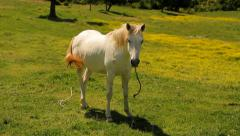 White horse on a spring pasture Stock Footage