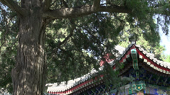Tilt from one of the pavilions with people walking through at the summer palace Stock Footage