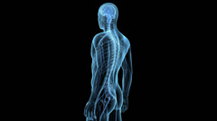 3d x-ray style animation showing the spinal cord - stock footage