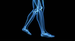 walking human animaton - transparent bones - stock footage