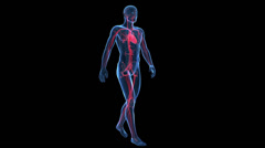 Stock Video Footage of Walking guy - vascular system