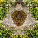 Stock Photo of moss heart on a stone