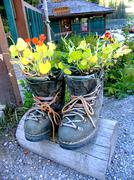 Novelty flower planter made of hiking boots, emerald lake, yoho national park Stock Photos