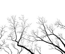 Bare branches Stock Illustration