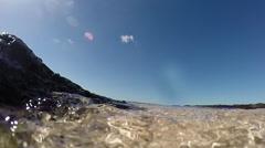 Seaweed underwater Fuerte Stock Footage